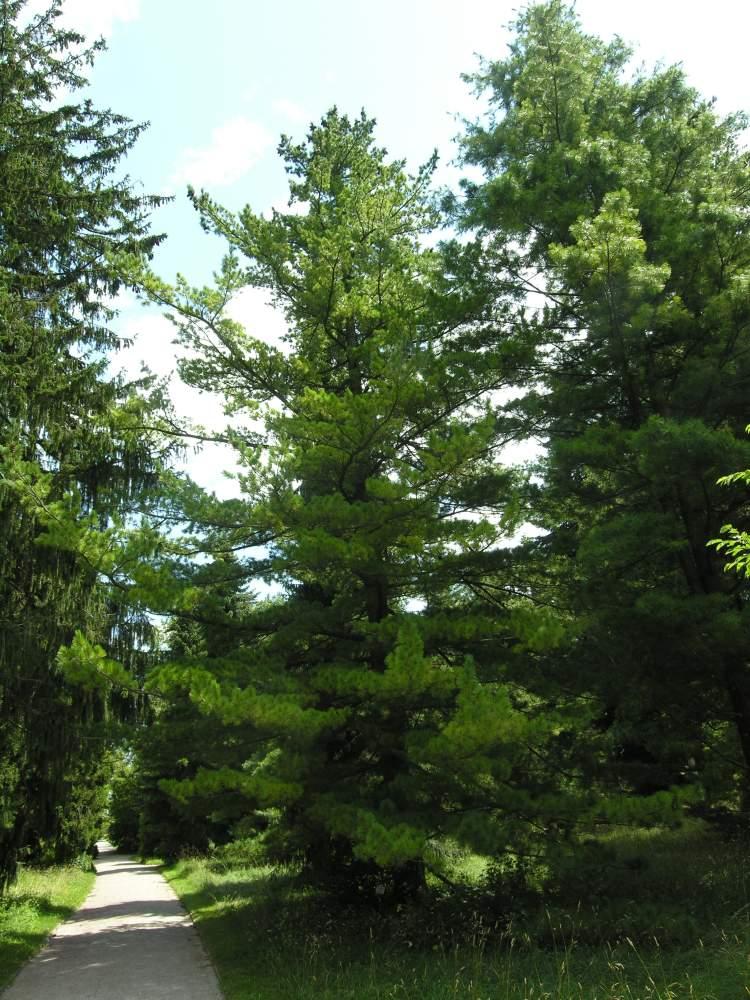 Botanischer Garten Italien Gardasee: Italian Common Name