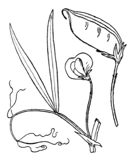 Sinonimi e contrari di cece nero sost pagina n 045605 for Indissolubile sinonimo