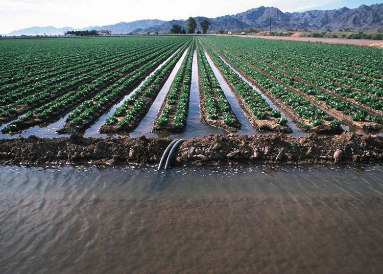 agriculture irrigation Irrigation benefits in agriculture is that irrigation ensures that crops are fed with water throughout there are many essential irrigation benefits in agriculture crops should not depend on the rain only.