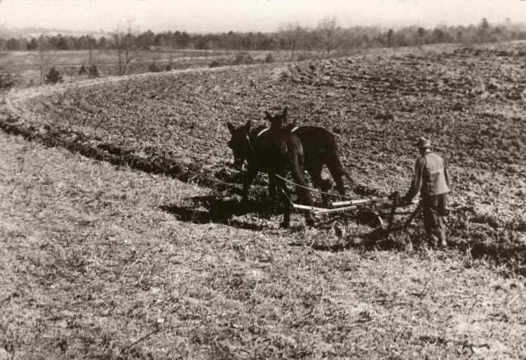 early farming Gallery