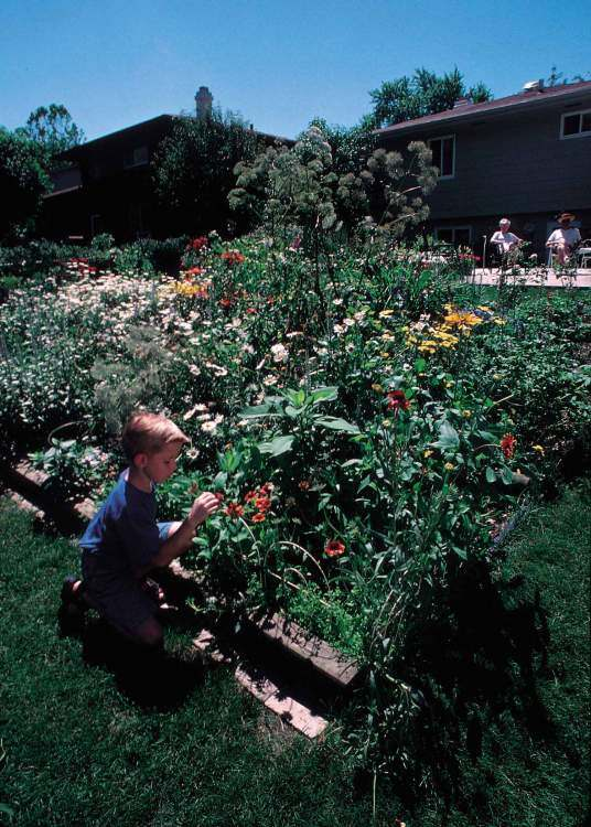 Flowers Are Part Of The Backyard Conservation Scene In A Home - Backyard conservation
