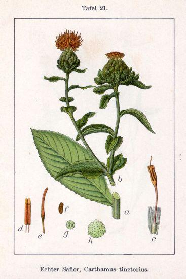 Carthamus Tinctorius Safflower: Carthamus Tinctorius L.